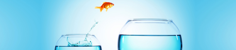 goldfish jumping through the air to a bigger bowl